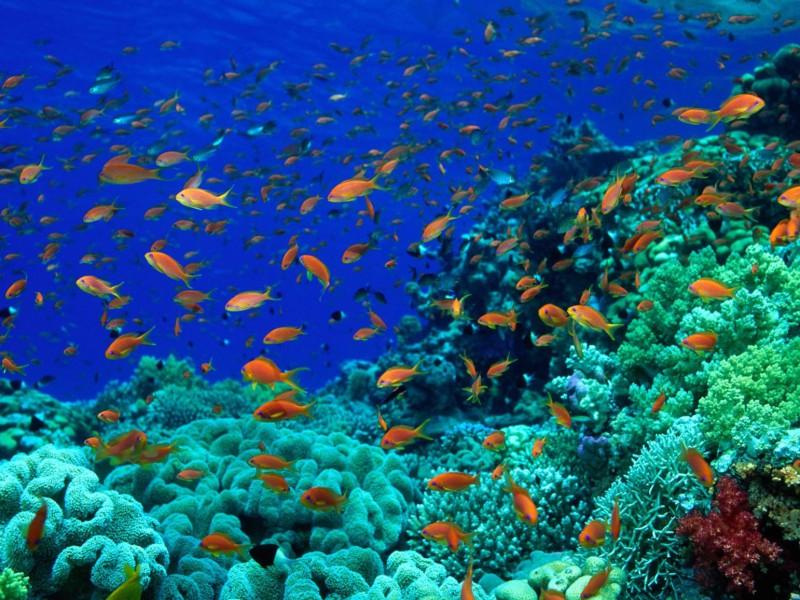 Decor Location Mer Oceans Fond Marin Aquatique Nova Quimper Morlaix Ev...